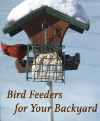 best bird feeders to attract birds to your backyard u2013 when life