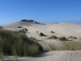 native plants grow on the sand dunes at this beach stock photo literature thediagonal