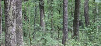 Arkansas forest images Silvicraft arkansas forest management timber thinning jpg