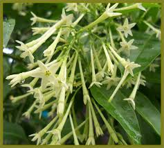 Tropical Plants Pictures - emerald goddess gardens tropical plants to buy native florida