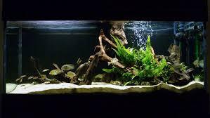 aquarium decoration ideas freshwater most beautiful freshwater tanks all time ratemyfishtank com