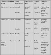biology biological classification revision notes for neet aipmt