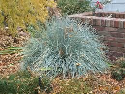 grass blue thetreefarm