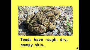 frogs and toads written by linda zuniga youtube