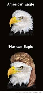 Funny Eagles Meme - funniest bald eagle meme compilation america