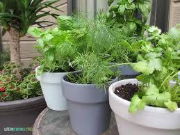 Potted Herb Garden Ideas Potted Herb Garden Guest Post Country Chic Paint
