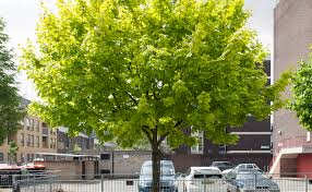 five of the best boroughs for trees the tree