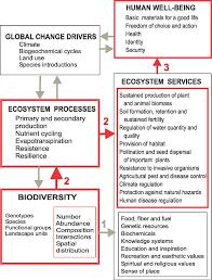 plos biology biodiversity loss threatens human well being