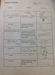 cell city analogy worksheet worksheets