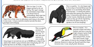 rainforest creatures comprehension classroom secrets