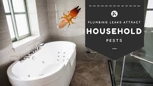 bathroom pests watch out for these water lovin u0027 bugs santa