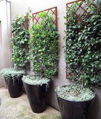 Garden Trellis Design by Best 25 Trellis Ideas Only On Pinterest Trellis Ideas Flower