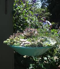 succulent garden ideas succulents in a hanging planter tended