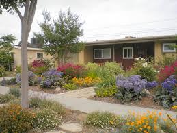 long beach landscape designer colorful drought tolerant garden