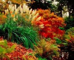 33 best south flower bed images on flower beds seeds