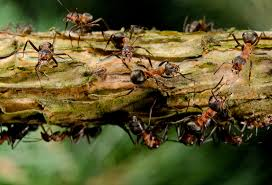 ants a prelude to climate change problems