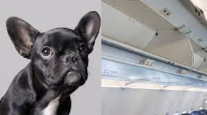 Know Your Meme Dog - 2018 united airlines dog death controversy know your meme