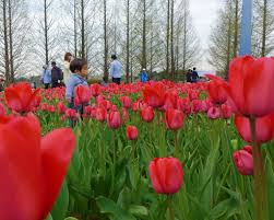 flower places top 5 outdoor places in osaka japan travel guides