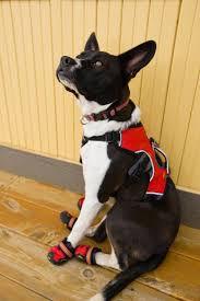 service dog gear from head to tail anything pawsable