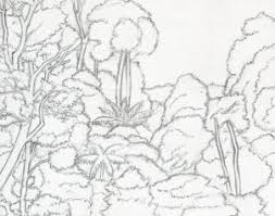 how to draw a canopy rainforest canopy step by step landscapes