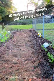 10 ways to make weeds go away life is just ducky