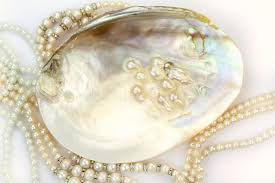 shell necklace with pearl images Pearl necklace with natural pearls in a oyster shell stock image jpg