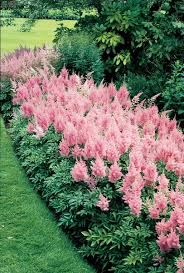 high heat plants top 10 flowers that bloom all year perennials plants and gardens