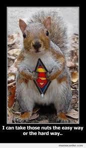 Squirrel Meme - super squirrel by ben meme center