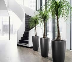 tall indoor plants low light darxxidecom