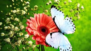 butterfly flower butterflies and flowers flower garden butterfly in garden