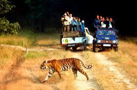 jim corbett national park wildlife tour asia green resorts