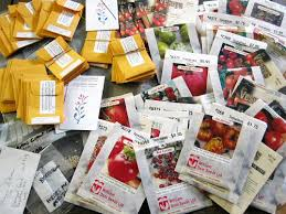 cheap seed packets where should you buy tomato seeds a catalog of tomato seed vendors