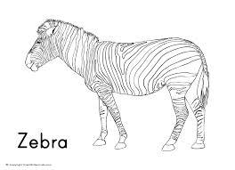 zebra colouring sheet