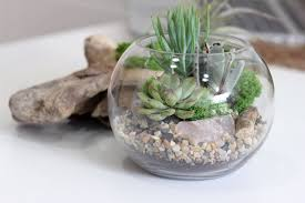 bowl terrarium fallcreekonline org