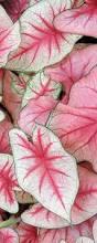 187 best macy u0027s flower show images on pinterest flower show