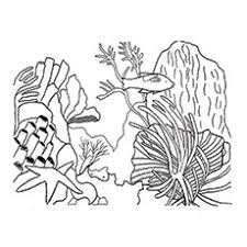 sea plants coloring pages top 10 coral coloring pages for toddler