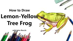 how to draw a lemon yellow tree frog with color pencils time