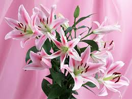 Beautiful Flowers Flowers Images