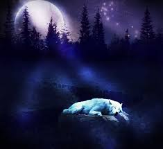 wolf s moon by frama on deviantart