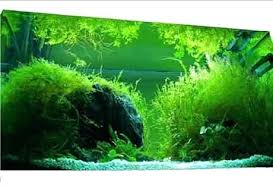 best led light for planted tank lighting for freshwater planted aquarium led freshwater best led
