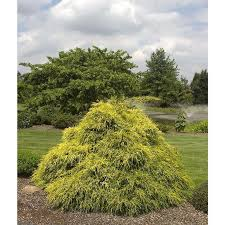 22 best new garden images on lowes shrubs and