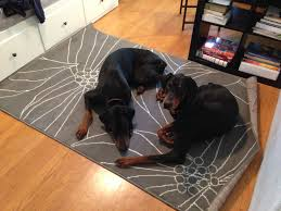 ikea dogs light fixture littlehousesbigdogs