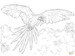 blue and yellow macaw coloring page free printable coloring pages