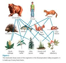 ecology part 3 science zone jamaica