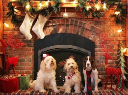 dog christmas top 5 dog christmas by labradors