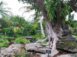 Naples Botanical Gardens Coupons Naples Botanical Garden Irma Best Idea Garden