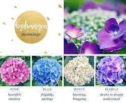 wedding flowers meaning hydrangea meaning and symbolism ftd