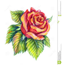 rose flower drawing games 40 beautiful flower drawings and