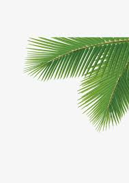 corner palm trees corner coco trees png and psd file for free