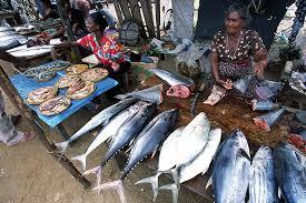 negombo fishmarket 4 jpg 1536 1024 fish market pinterest fish